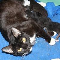 Adopt A Pet :: Kit - Stevensville, MD