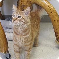 Adopt A Pet :: Victor - Gaylord, MI
