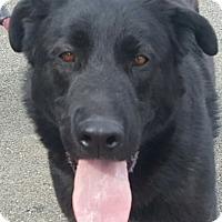 Adopt A Pet :: Prince - Canoga Park, CA
