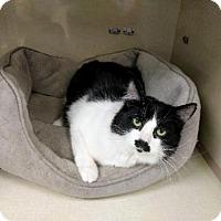 Adopt A Pet :: Cat-Mim - Denver, CO