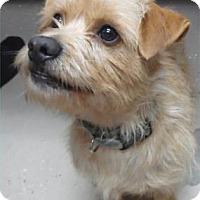 Adopt A Pet :: Scooter - Waupaca, WI