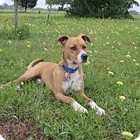 Adopt A Pet :: A - LUKE - Portland, OR