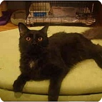Adopt A Pet :: Alfonzo - Muncie, IN