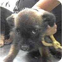 Adopt A Pet :: Fuzzy - Seattle, WA