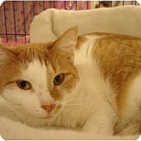 Adopt A Pet :: Nori - Chesapeake, VA
