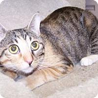 Adopt A Pet :: Kathryn - Colorado Springs, CO