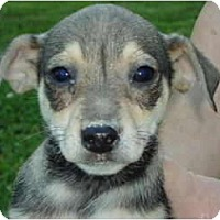 Adopt A Pet :: Isaac - Plainfield, CT