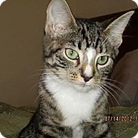 Adopt A Pet :: Dorie - Bunnell, FL