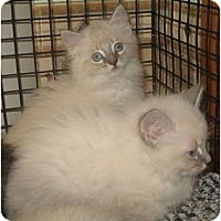 Adopt A Pet :: Sangria & Sauvignon - Acme, PA