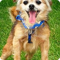 Adopt A Pet :: Rusty - Osseo, MN