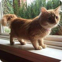 Adopt A Pet :: Lily - Trevose, PA