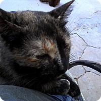 Adopt A Pet :: Toffee - Medford, NY