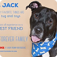 Adopt A Pet :: A -Jack Jack - Seattle, WA
