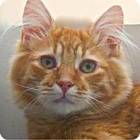 Adopt A Pet :: Redmond - Davis, CA