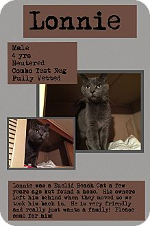 Domestic Shorthair Cat for adoption in CLEVELAND, Ohio - Lonnie