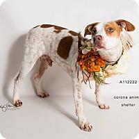 Adopt A Pet :: KENNEL 7 - Corona, CA