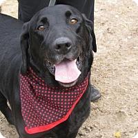 Adopt A Pet :: Henry - Voorhees, NJ