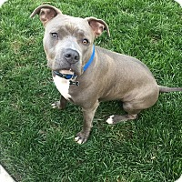 Adopt A Pet :: Lincoln - Newport Beach, CA