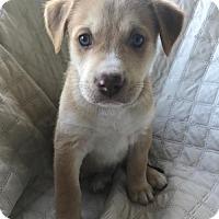 Adopt A Pet :: Theo - Royal Palm Beach, FL