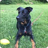 Adopt A Pet :: TUGG:ready for adoption - Sterling, MA