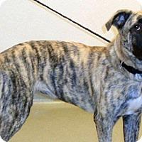 Adopt A Pet :: Marble - Wildomar, CA