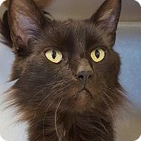 Adopt A Pet :: Felicia - Grayslake, IL