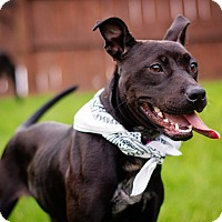 Pit Bull Terrier Mix Dog for adoption in Tower City, Pennsylvania - Zelda