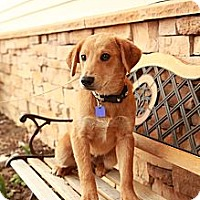 Adopt A Pet :: Lager - Lancaster, OH