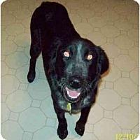 Adopt A Pet :: Abbey - Bowie, TX