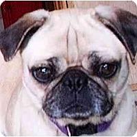 Adopt A Pet :: Lucy - Mays Landing, NJ