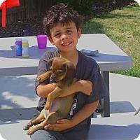 Adopt A Pet :: Tempo - Sacramento, CA