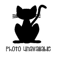 Adopt A Pet :: Ava Meowski - Irvine, CA