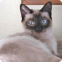 Adopt A Pet :: Shadow - Davis, CA