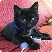 Adopt A Pet :: Cooper - Lebanon, PA