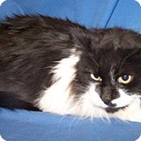 Adopt A Pet :: Osiris - Colorado Springs, CO