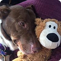 Adopt A Pet :: Gracie2 - Las Cruces, NM