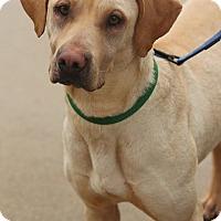 Adopt A Pet :: Demi - Lafayette, IN