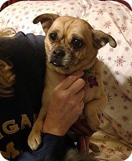 Pug/Chihuahua Mix Dog for adoption in Farmington Hills, Michigan - Nena - Adoption Pending!