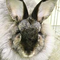 Adopt A Pet :: Chenille and Chino - Seattle c/o Kingston 98346/ Washington State, WA