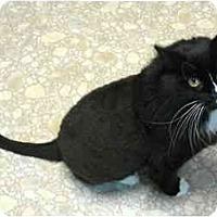 Adopt A Pet :: Alice - Plainville, MA