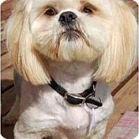 Adopt A Pet :: Magoo - Rigaud, QC