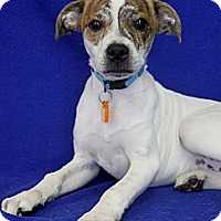 Adopt A Pet :: Jacob - Wichita, KS