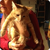 Adopt A Pet :: Anakin - Troy, OH