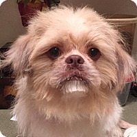 Adopt A Pet :: Laysha - Orlando, FL