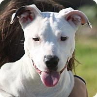 Adopt A Pet :: Loren - Cranston, RI
