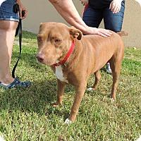 Adopt A Pet :: Lady - Humble, TX