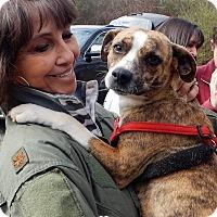 Adopt A Pet :: *Sweet Suzie - PENDING - Westport, CT