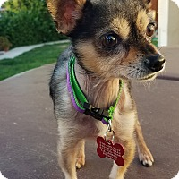 Adopt A Pet :: Gizmo 4 lbs. - Los Angeles, CA