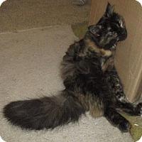 Adopt A Pet :: Bella - detroit, MI