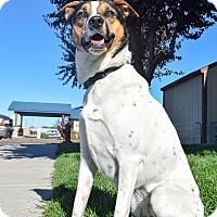 Adopt A Pet :: Trixie - Meridian, ID